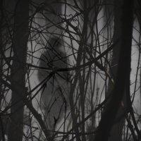 Силуэт в тумане :: Toha Simonov