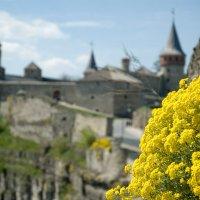 Весна в древнем Каменце. :: Николай Сидаш