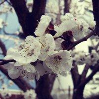 Весна в городе :: Lilia Kamalova