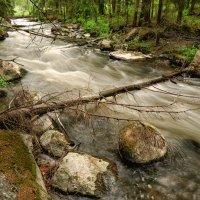 Лесные бурные потоки :: Евгений Плетнев