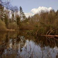 Лесное озеро :: Виктория Колпакова