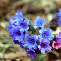 Первый весенний цветочек) :: Юлия Кутьина