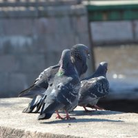 Мир птиц :: Анна Карасева