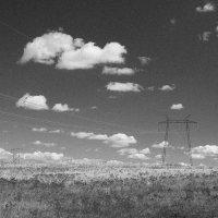 Весенние поля :: Елена Васильева