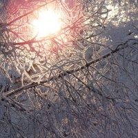 Frost :: Mikhail Prokaznikov