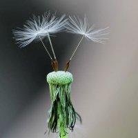 сила ветра облысела одуванчик :: valeriy g_g