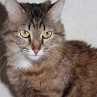 Серьезная кошка :: Зинаида Ермакова