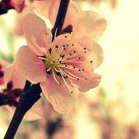 весна :: Ксения Никитина