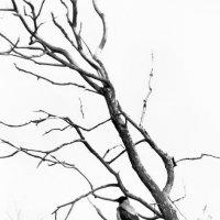 Одиночество :: Алёна Михеева