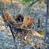 Пустое гнездо :: Mariya Bryuchova