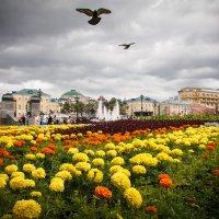 Тучи над Александровским садом :: Наталья Аракчеева