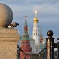 Москва,голубь 5.08.2012г. :: Виталий Виницкий