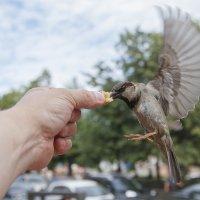 Типа колибри :: Павел Myth Буканов