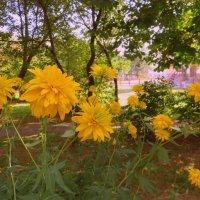 А у нас во дворе,,, :: Ирина Олехнович