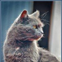 тише, мыши, кот на крыше :: Дмитрий Анцыферов
