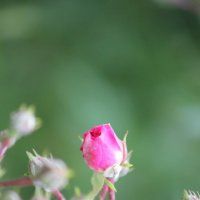 Цветочный хоровод-595. :: Руслан Грицунь