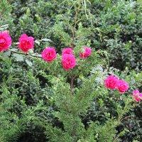 Цветочный хоровод-592. :: Руслан Грицунь