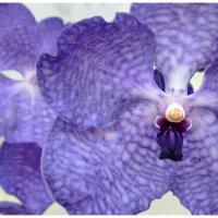 фиолетовый цвет :: Elena Bettella