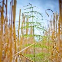 Один в поле и зеленый :: Михаил Кучеров