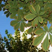 Голубое небо сквозь листву :: °•●Елена●•° Аникина♀