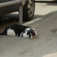 Ленивый кот - автосторож :: Валерий