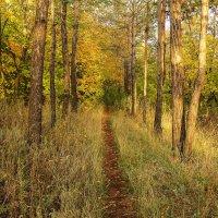 По тропинке леса в Осень. :: Elena Izotova