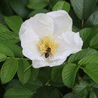 Вкусный цветок :: Олег Попков