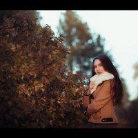 Осень :: Илья Земитс