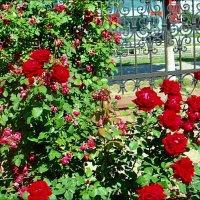 В монастырском саду :: Нина Корешкова
