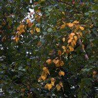 Заплетала косы осень.... :: Юрий