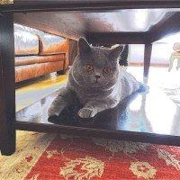 Кот в интерьере :: Светлана Лысенко