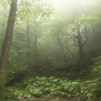 Таинственный лес :: ИГОРЬ Войцеховский