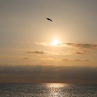 Полет перед закатом :: valeriy khlopunov