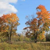 Осень на пороге :: Зоя Мишина