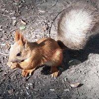 И семечки хорошо,но орешки лучше! :: Наталья