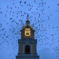 Утренние вороны... :: Наталья Вельди