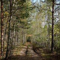 Лесными тропами.. :: Subway S