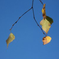 Осенний этюд :: Grey Bishop