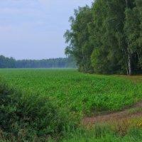 Огибая кукурузное поле... :: марк