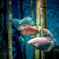 Подводный мир :: Вера N