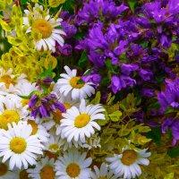 Полевые цветы :: Рома Григорьев