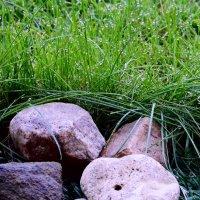 Трава у дома... :: Михаил Болдырев