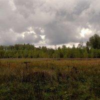 Сентябрьское болотце :: Светлана Лысенко