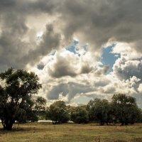 Не спорит ветер с тайнами дождей... :: Лесо-Вед (Баранов)