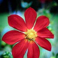 Аленький цветочек :: Рома Григорьев