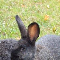 Кролики :: Наталья