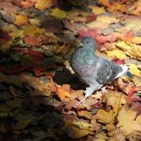 Мадам, уже падают листья... :: Ната Волга