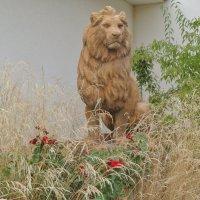 Брошенный лев :: Маруся
