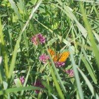 Бабочка :: Наталья А