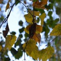 Осень :: Елизавета Седловская